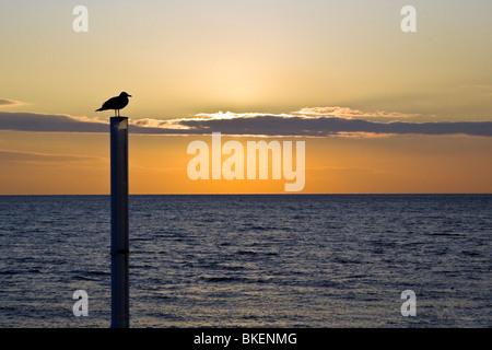 Silhouette de seagull at beach pendant le coucher du soleil, Brighton, Royaume-Uni. JPH0268 Banque D'Images