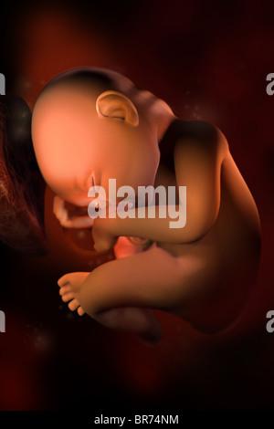 Ce 3D medical image représente un foetus au (33) semaines. Banque D'Images