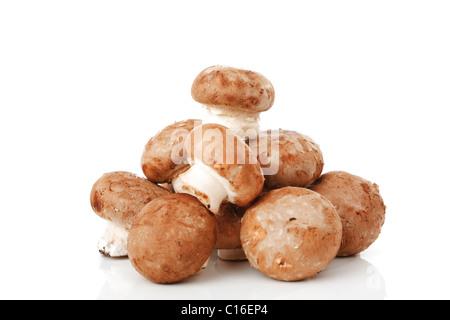 Champignons biologiques (Agaricus) Banque D'Images
