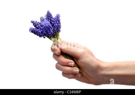 Femme main tenant des fleurs colorées Banque D'Images