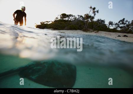 Snorkeler et stingray en fin d'après-midi près de l'île Heron partie orientale fait partie de l'Capricornia Cays Banque D'Images