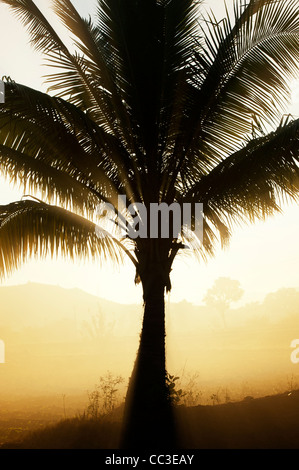 La fumée et palmiers silhouette dans la campagne indienne dans la lumière du soleil tôt le matin. L'Andhra Pradesh, Banque D'Images