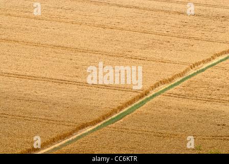 Sentier à travers champ, les agriculteurs (North Downs Way), Kent, Angleterre, Royaume-Uni Banque D'Images