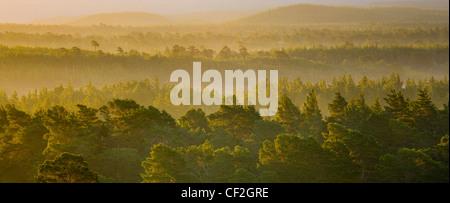 L'augmentation de la brume à l'aube sur la forêt écossaise des Rothiemurchus, dans le Parc National de Cairngorms. Banque D'Images