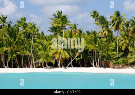 République dominicaine, péninsule de Samana, le Parc national del Este, l'île de Saona, la plage et les cocotiers Banque D'Images