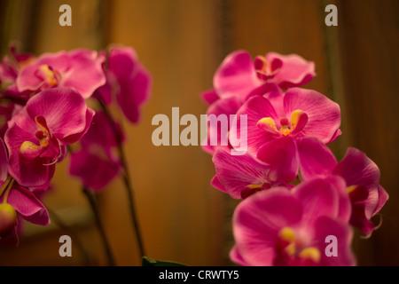 Fleurs d'orchidées dans l'Astor House Hotel, à Shanghai, en Chine. Banque D'Images