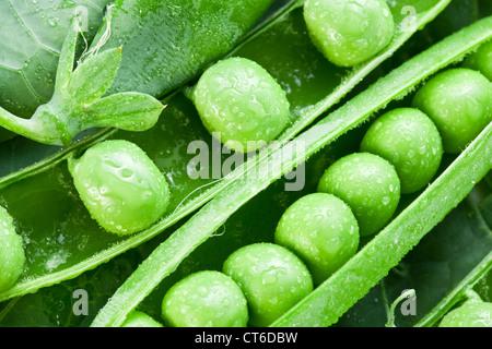 Gousses de pois verts sur fond de feuilles. Banque D'Images