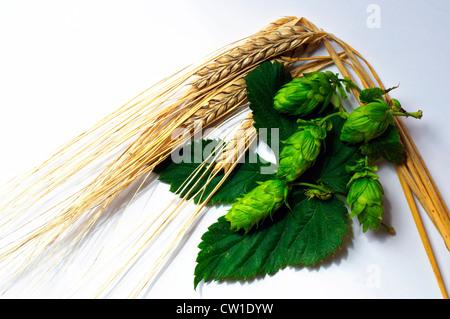 Venu d'orge et de houblon, les deux principaux ingrédients de la bière. Banque D'Images