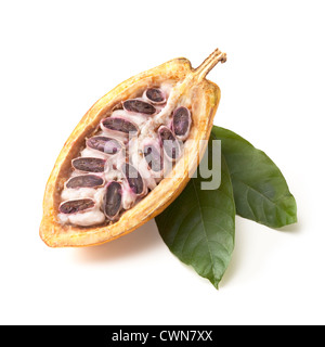 Theobroma cacao, fève de cacao Banque D'Images