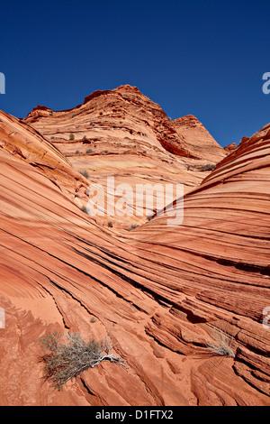 La mini-formation de vagues, Coyote Buttes Wilderness, Vermillion Cliffs National Monument, Arizona, États-Unis Banque D'Images