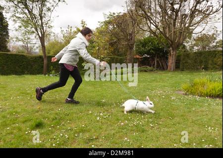 Adolescent fille qui marche un papillon anglais lapin blanc en laisse sur une pelouse avec marguerites avec faisceau Banque D'Images