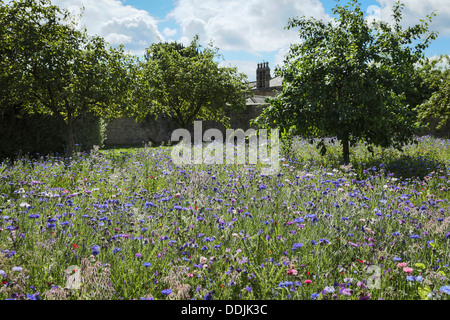 Wild Flower meadow Ripley Castle, Yorkshire, Angleterre Banque D'Images