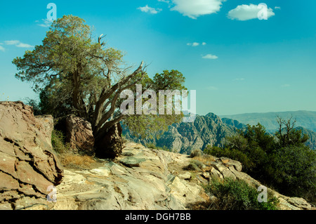 Vue d'un paysage avec un arbre en premier plan dans la région de Petra, Jordanie Banque D'Images