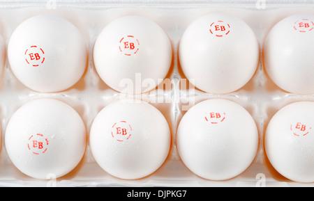 Close up d'oeufs d'une boîte d'une douzaine d'Egg-Land Meilleurs Œufs Extra Large, USA Banque D'Images