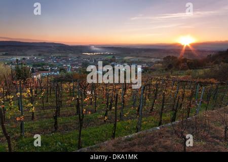Coucher de soleil sur le vignoble italien - Piémont Banque D'Images