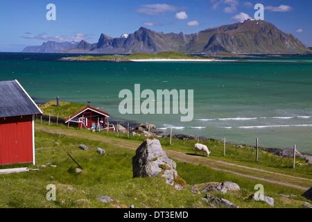La ferme des animaux avec toit de chaume sur les îles Lofoten en Norvège Banque D'Images