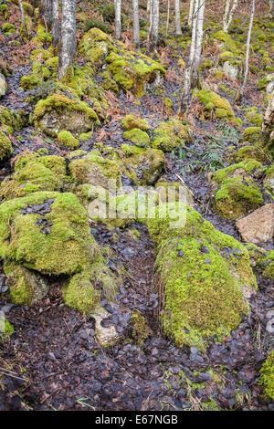 Des roches couvertes de mousse à la graver O' La TVA à Dinnet Aberdeenshire, Ecosse. Banque D'Images