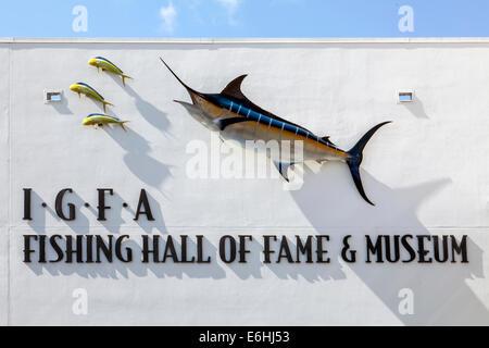 Marlin bleu (Makaira nigricans) et Coryphène (Coryphaena hippurus) monté sur mur de pierre, IGFA Fishing Hall of Banque D'Images