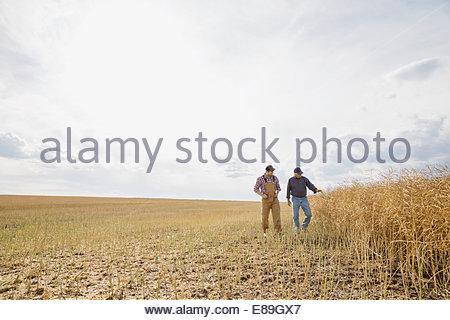 Quelques agriculteurs à sunny wheat field Banque D'Images