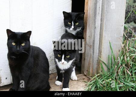Famille de chats dans l'embrasure Banque D'Images