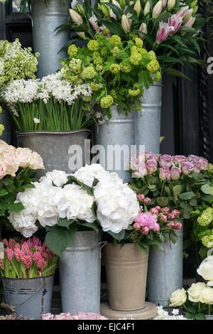 Fleurs de Printemps y compris lilas, Hydrangea, jacinthe, paperwhites, pivoines et roses dans des seaux de zinc Banque D'Images