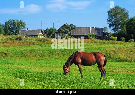 Paysage rural. Cheval brun sur les pâturages. Banque D'Images