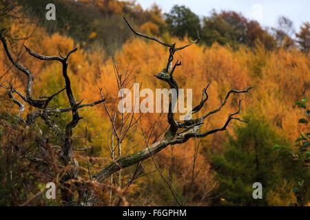 Image d'Penallta Parc Hengoed Caerphilly dans le sud du Pays de Galles UK Banque D'Images