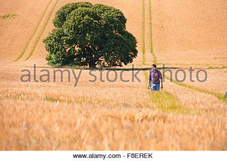 Farmer walking in rural crop field orge ensoleillée en été Banque D'Images