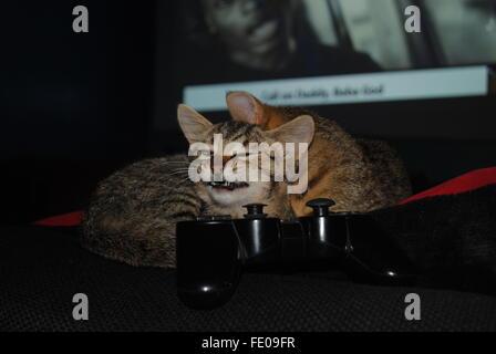 Deux chatons assis avec une manette de jeu play station Banque D'Images
