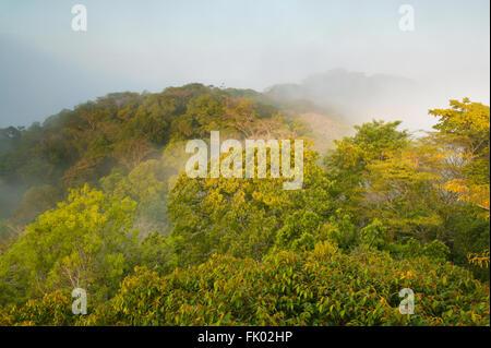 La brume au lever du soleil dans la forêt tropicale du parc national de Soberania, République du Panama. Banque D'Images