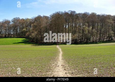 Un paysage rural avec la voie à travers un champ qui mène dans un bois de hêtre dans les collines de Chiltern Banque D'Images