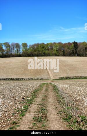 Un paysage rural avec la voie à travers un champ dans le Chiltern Hills Banque D'Images