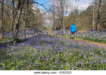 Holwick, Middleton-in-Teesdale, Co Durham, Royaume-Uni. 14 mai 2016. Par un beau jour clair dans le nord des Pennines Banque D'Images
