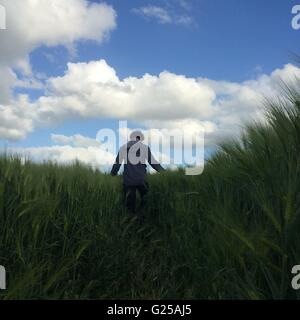 Vue arrière de l'homme marche à travers champ, Niort, France Banque D'Images