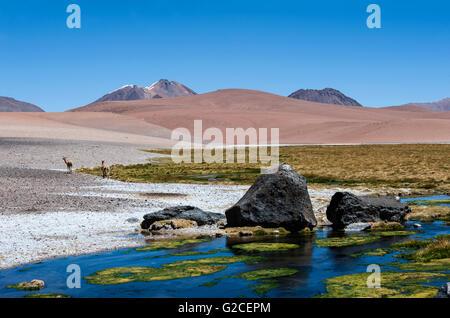 Route à travers les Andes près de Paso Jama, Chile-Argentina-Bolivie. Banque D'Images