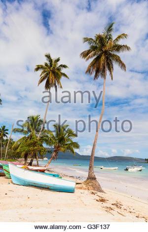 Bateaux de pêche et de cocotiers sur la plage de sable fin, Playa las Galeras, Las Galeras, Péninsule de Samana, Banque D'Images