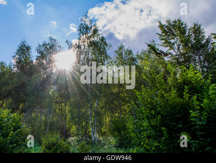 La lumière du soleil qui à travers des arbres Banque D'Images