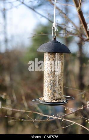 Une mangeoire suspendue dans le trois et attendre que l'oiseau à venir Banque D'Images