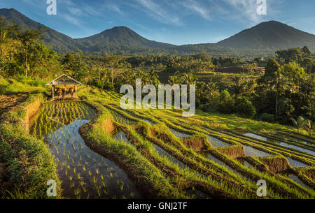 Terrasse de riz Jatiluwih, Bali, Indonésie Banque D'Images