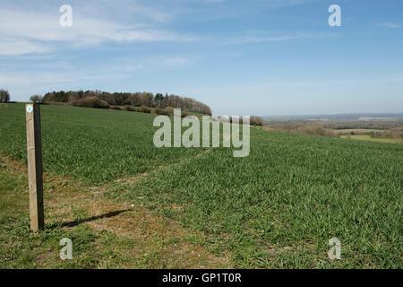 Sentier signe et couper le chemin par étapes d'un champ de blé d'hiver sur le North Wessex Downs en Avril Banque D'Images