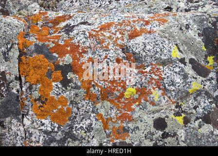 Le lichen poussant sur des rochers près de granit, le lac de Brainard Région de Palisades, John Muir Wilderness, Banque D'Images