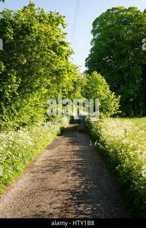 Non adopté piste étroite à travers un paysage agricole vert dans Old Derry Hill Wiltshire England UK Banque D'Images