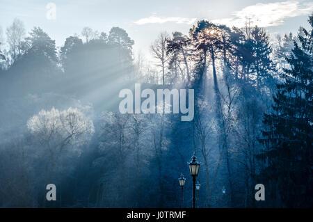 Les rayons du soleil à travers les arbres en paysage d'hiver Banque D'Images