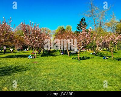 Bucarest, Roumanie - 10 avril 2017: Les gens s'amuser dans le jardin japonais du Parc Herastrau sur week-end de Banque D'Images