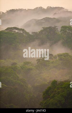 Parc national de Soberania, République de Panama, 20 mai, 2014. Misty rainforest après la pluie dans le parc national Banque D'Images