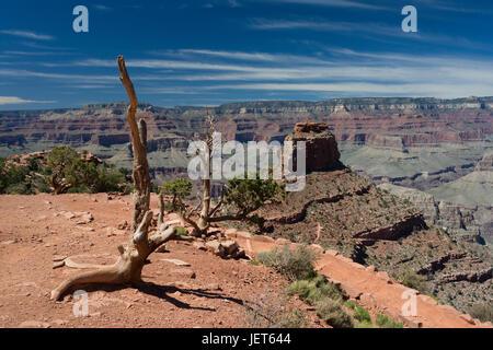 Vue du Grand Canyon, de Cedar Ridge Banque D'Images
