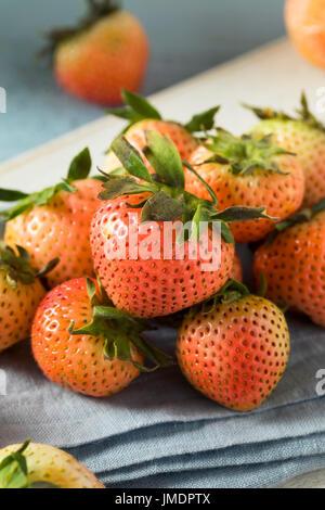 Rose et Blanc biologiques crus prêts à consommer les fraises rougissent Banque D'Images
