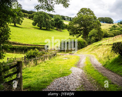 Une piste à travers le paysage estival de Parc National d'Exmoor. Banque D'Images