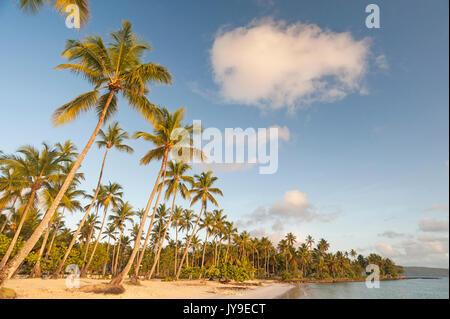Plage de rêve avec cocotiers en République Dominicaine Banque D'Images