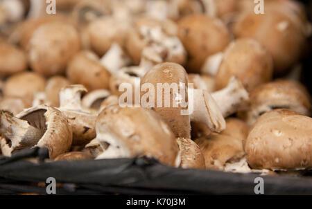 Un tas de faire revenir les champignons, les matières premières, dans un panier du marché agricole Banque D'Images